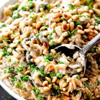 Mushroom Orzo Pasta In Asiago Thyme Sauce